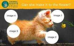 ANIMAL RIGHTS PNW GRAPHIC DRAFT